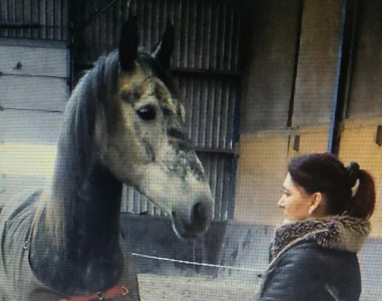 paard en ik